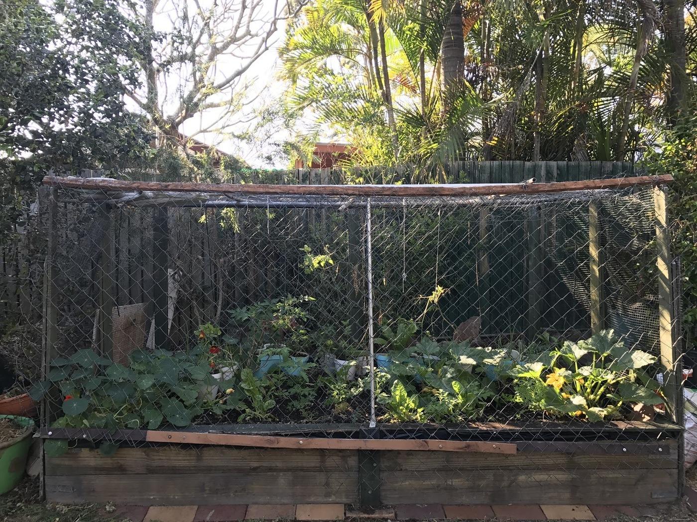 Herb Garden with Chicken Wiring