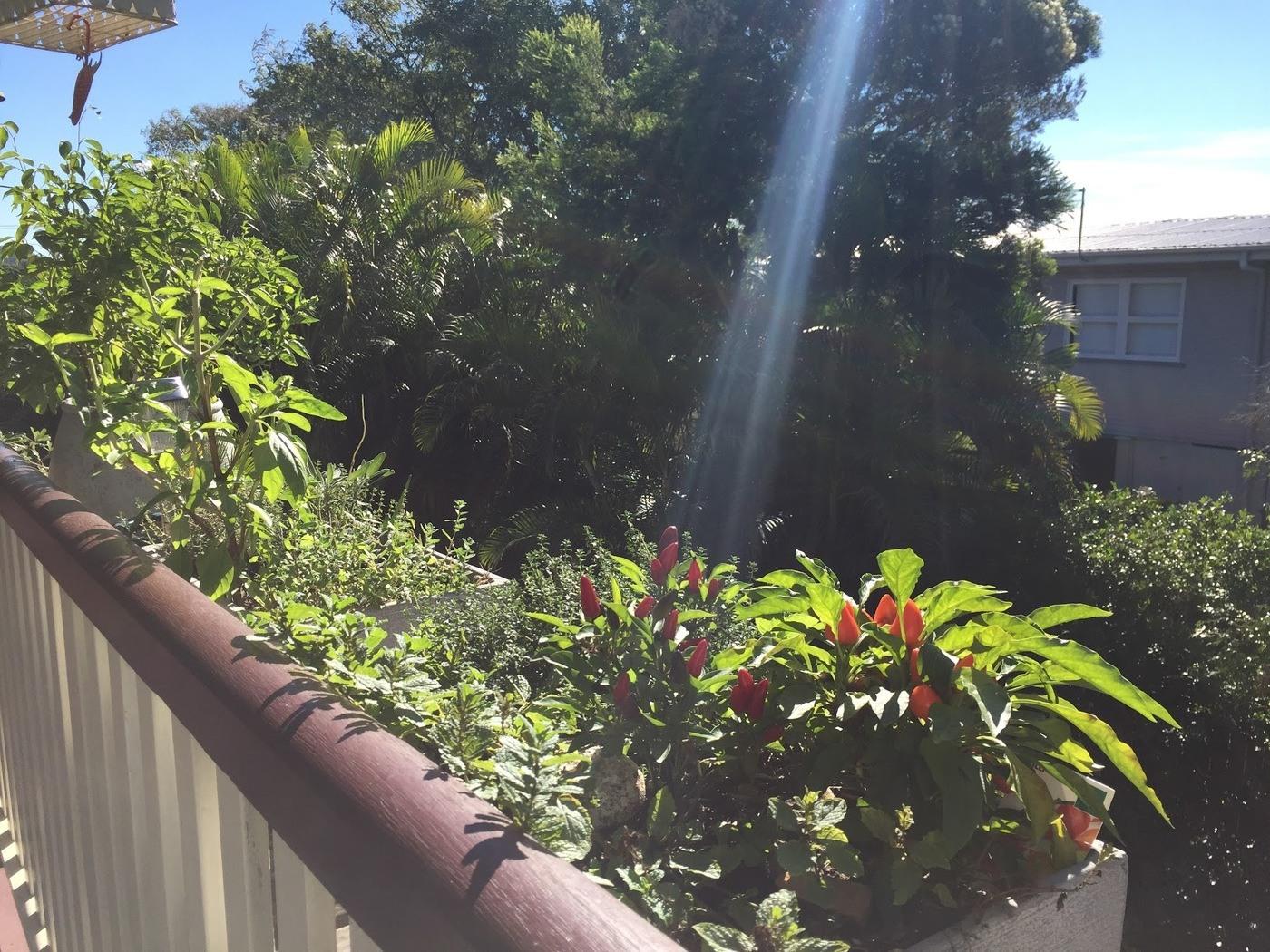 verandah garden established
