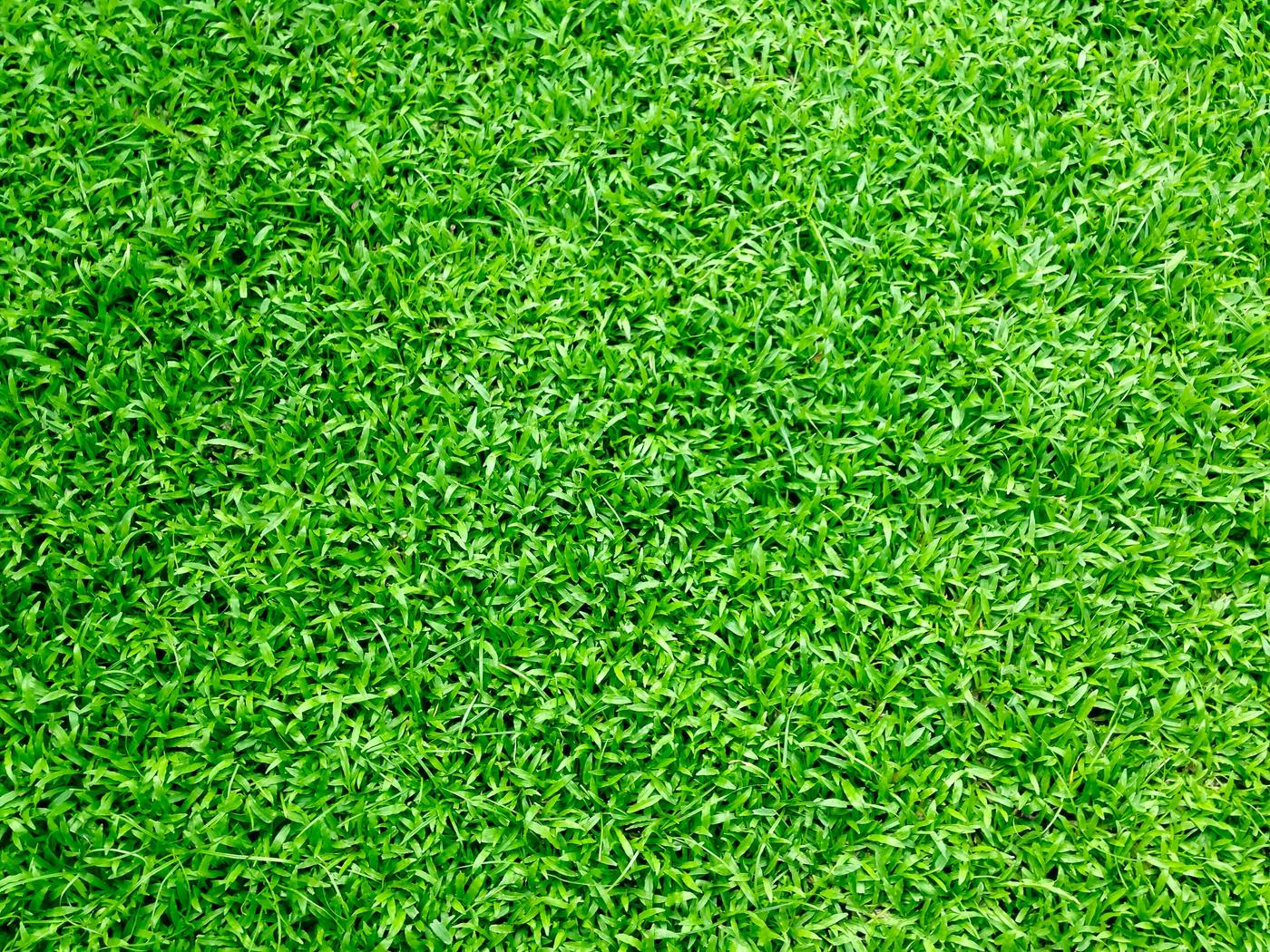 How To Buy The Right Grass Seeds For Your Lawn