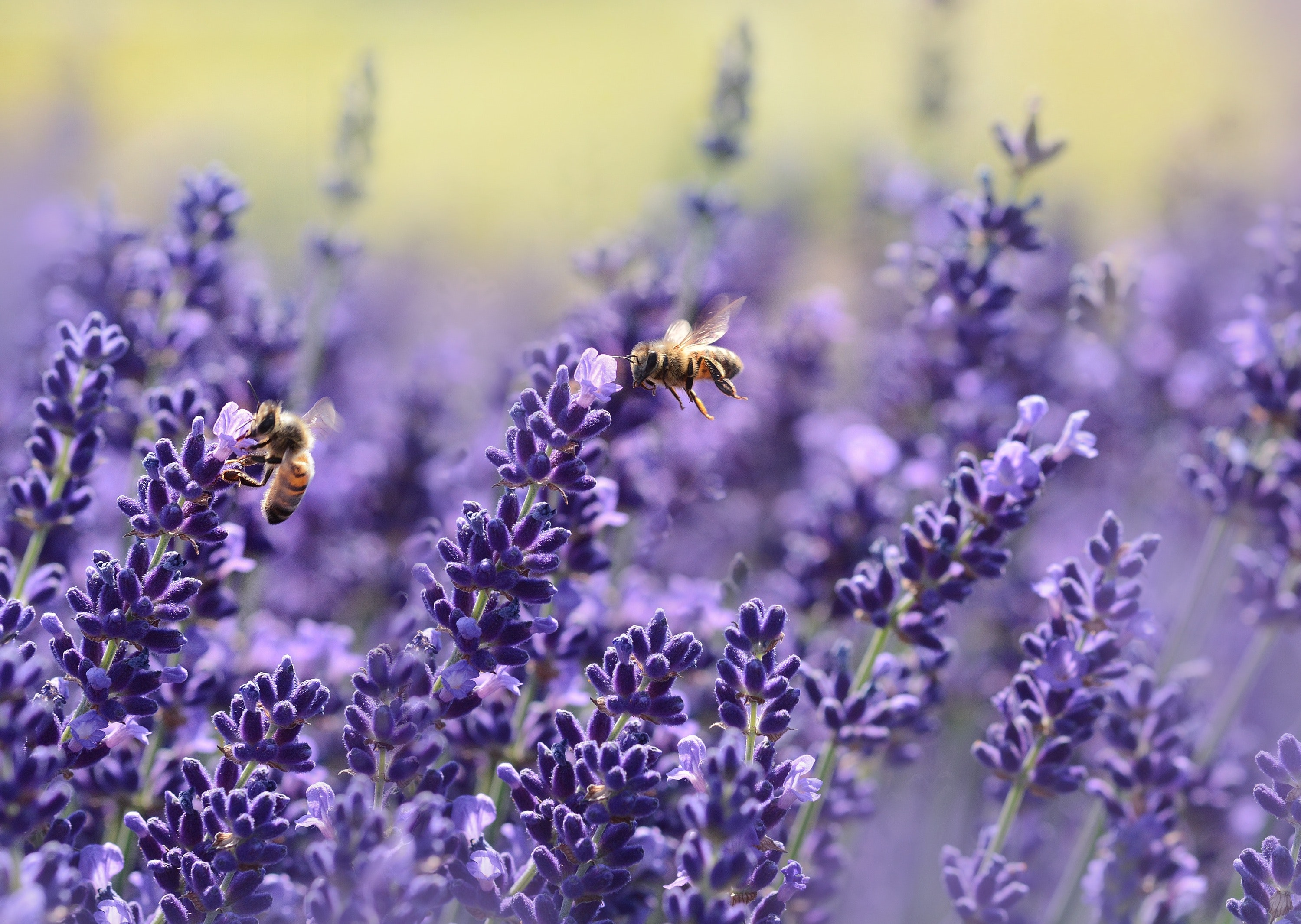 How to Keep Bees Happy on Your Lawn