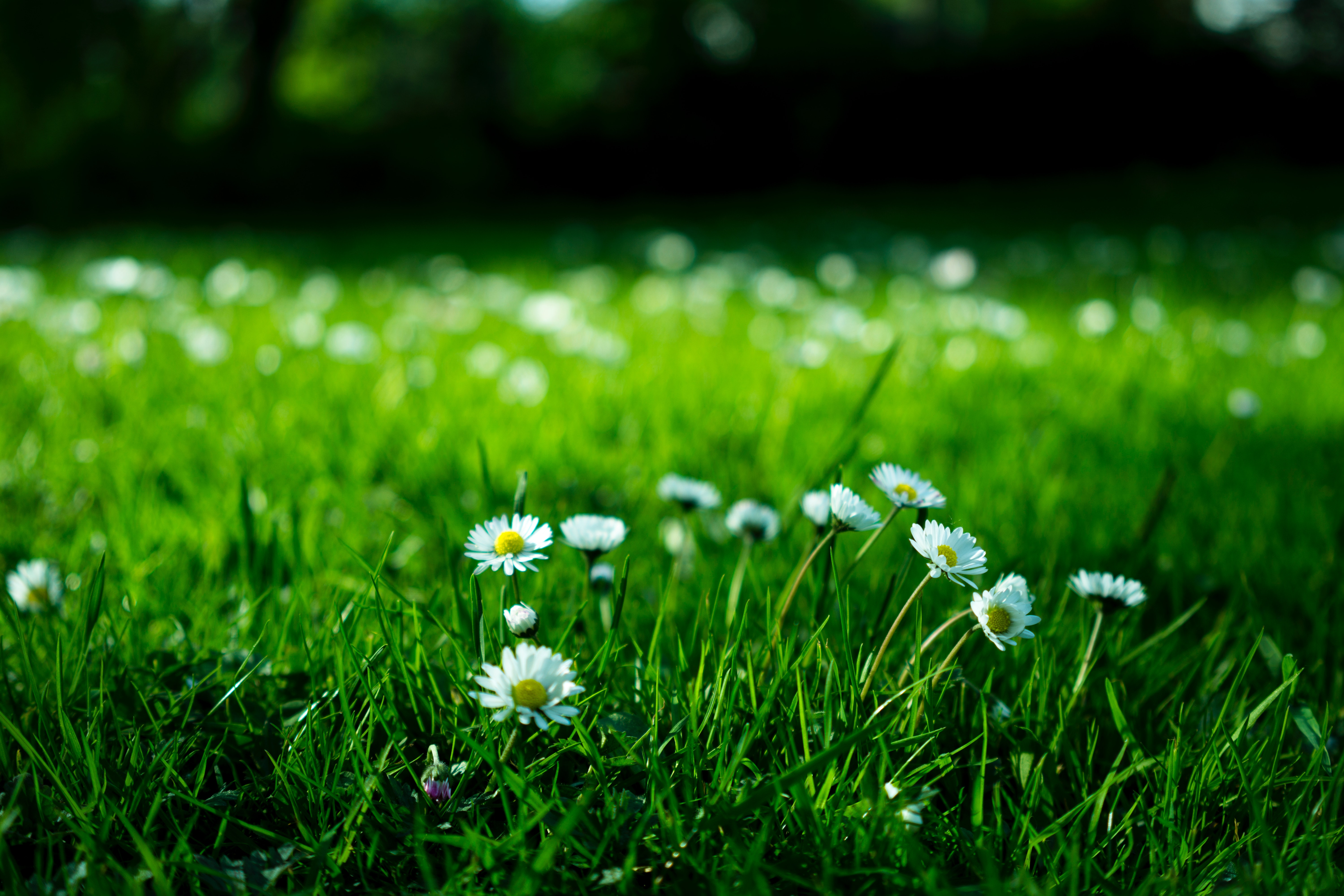 How To Get Rid of Weeds Without Hurting the Environment