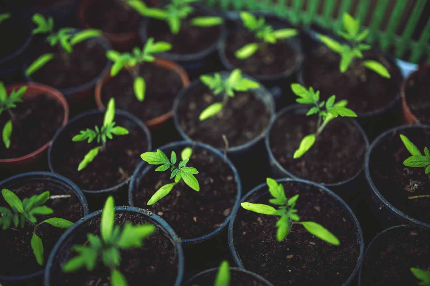 How to Store Seedlings