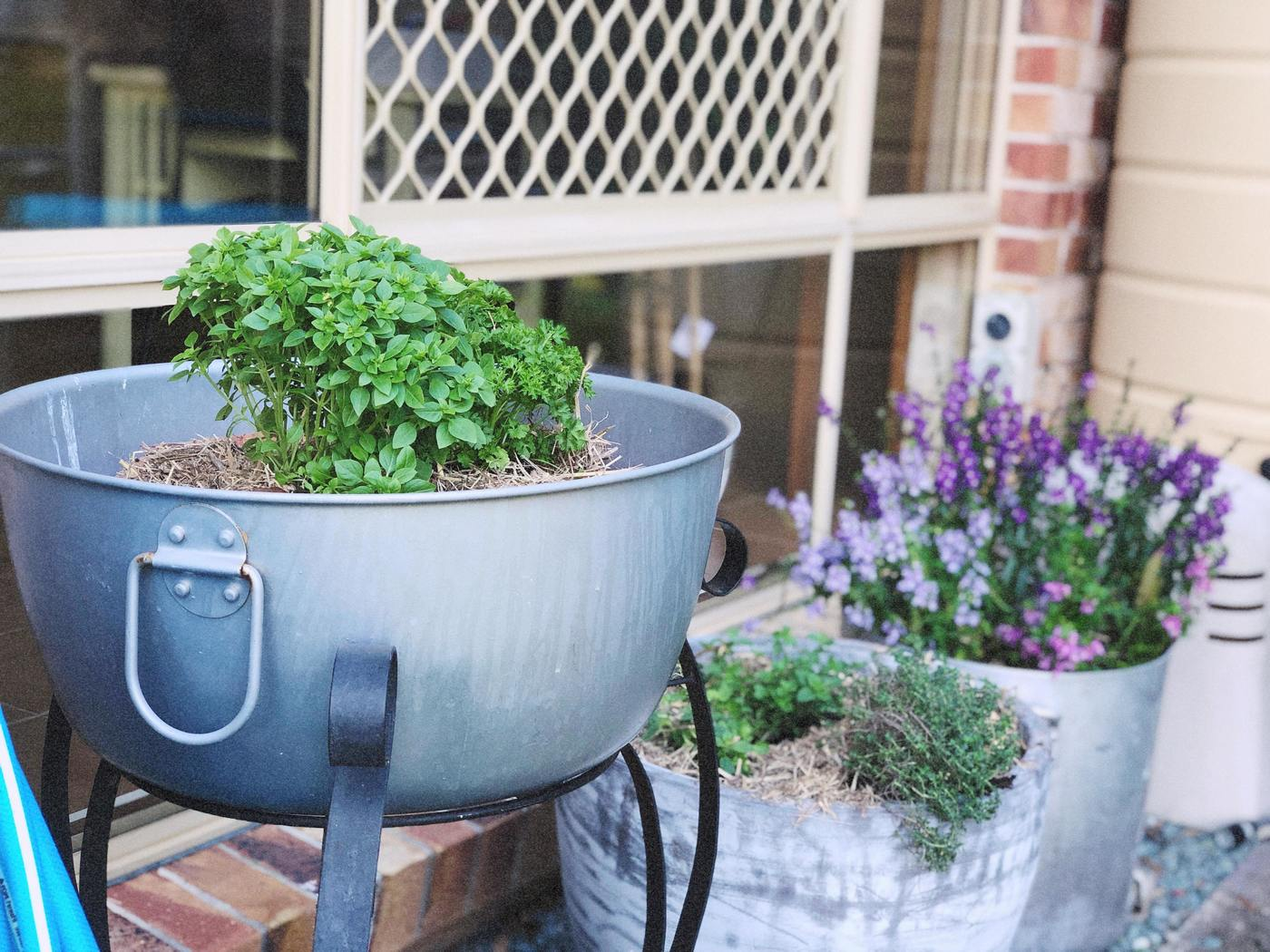 Build a herb garden in a day