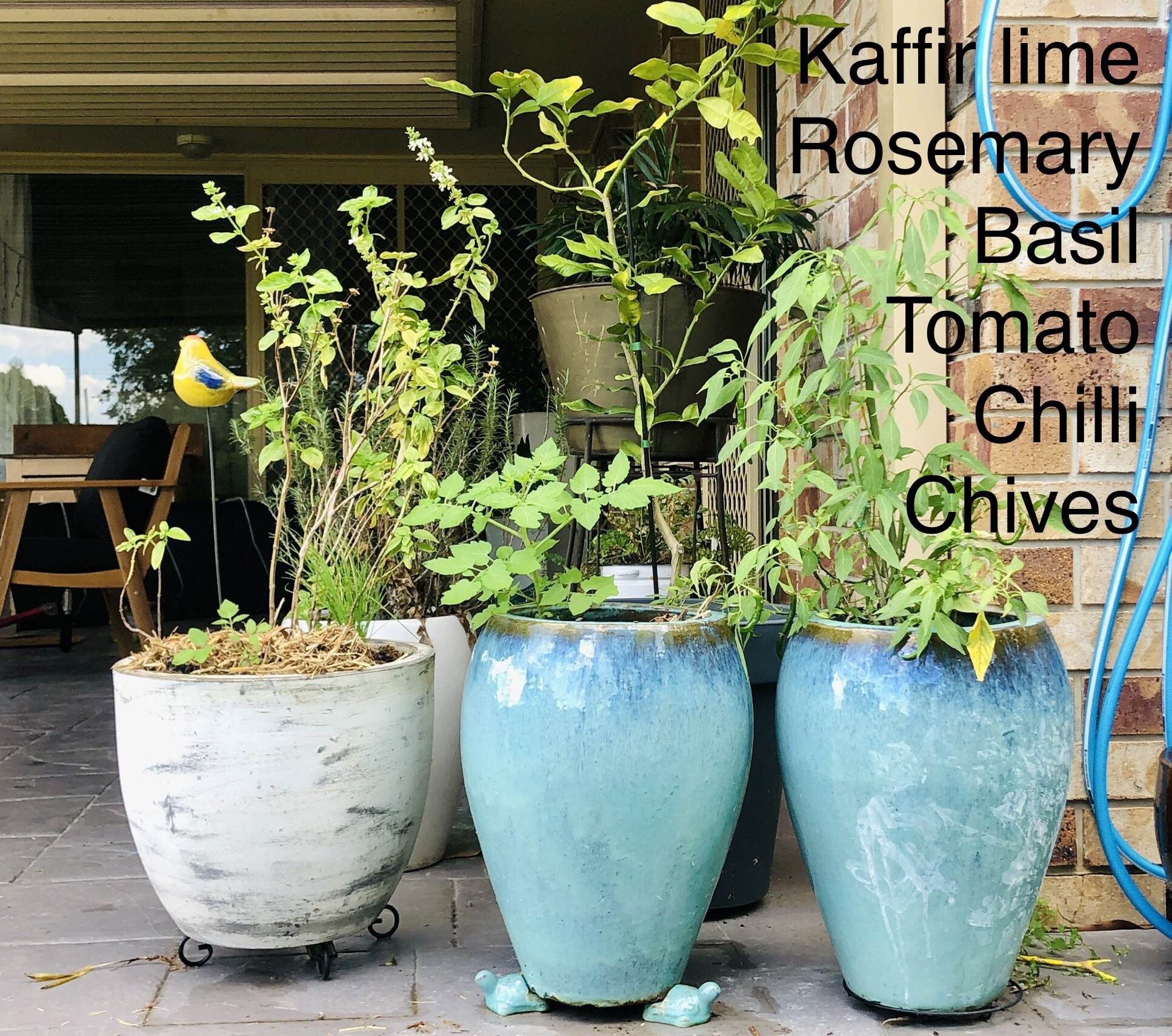 new pots herbs
